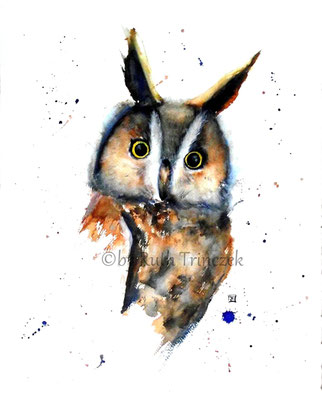 "Waldohreule .  Long-eared Owl - ""Pathfinder II"" - Aquarell - 34 x 44 cm - available - zu verkaufen - Preis auf Anfrage"
