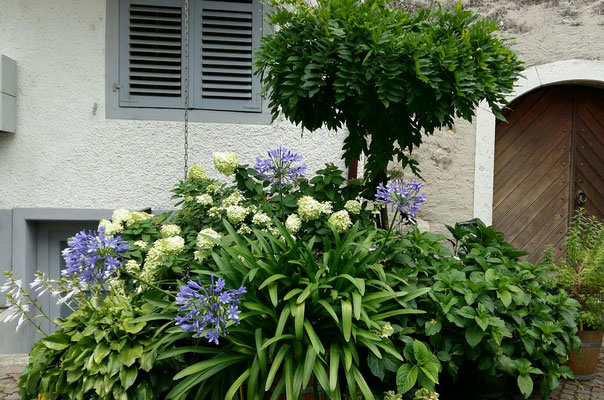 Verschiedene Blumen Arten