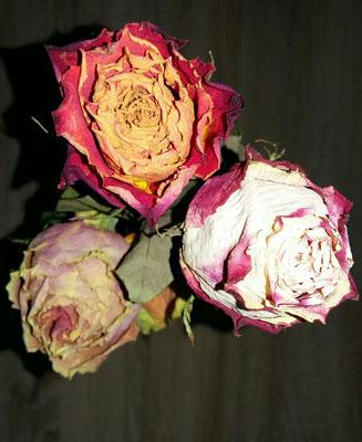 Trocken Rosen