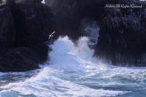 ウミネコが荒々しい波の上を一匹飛んでいる様に情緒を感じました。(加西市美術家協会長賞)