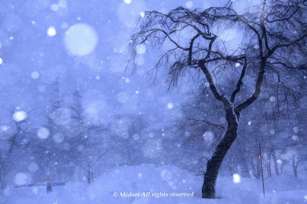 青森はすごく吹雪いていましたが情緒のある町でした。