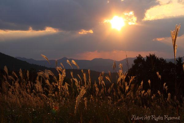 ススキ野原に一瞬、差し込んだ光。