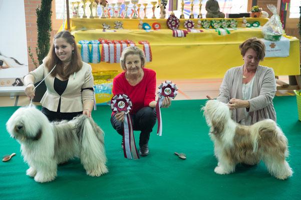 Tibet Terrier BOB & BOS Sonntag