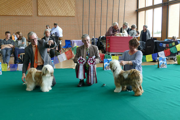 Tibet Terrier BOS & BOB Samstag