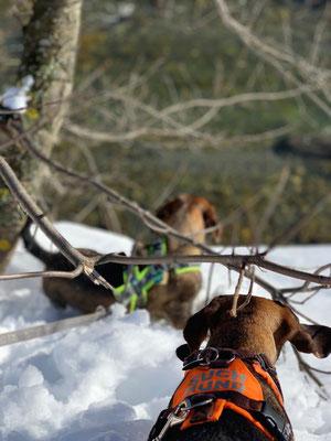 Suchhund auf Abwegen, Richtung Rosanna