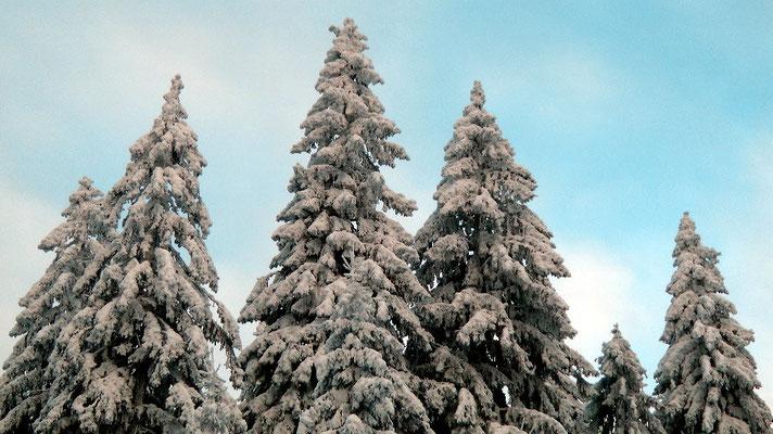 Winterwanderung von der Ochsenkopfseilschwebebahn Talstation Nord in Bischofsgrün hoch auf den Ochsenkopf 1024 m