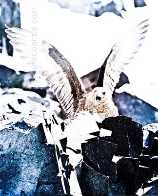 2008.01.17  -  Skua, Detaille Island, Antarktische Halbinsel