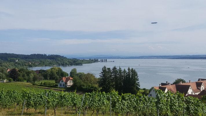 Weinberge und Bodensee
