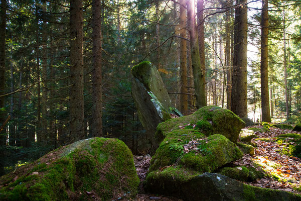Eine schöne Felsfrond auf dem Wanderweg zwischen Bischofsmais und Habischried.