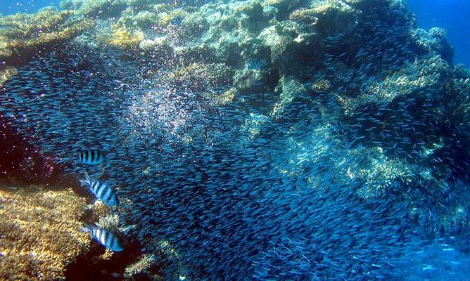 Die Riffe sind zum Schnorcheln ein Traum