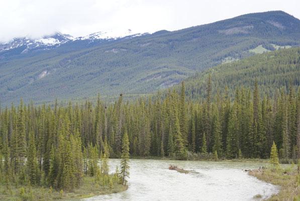 Wanderung abseits der Trans Canada Hwy. bei Banff