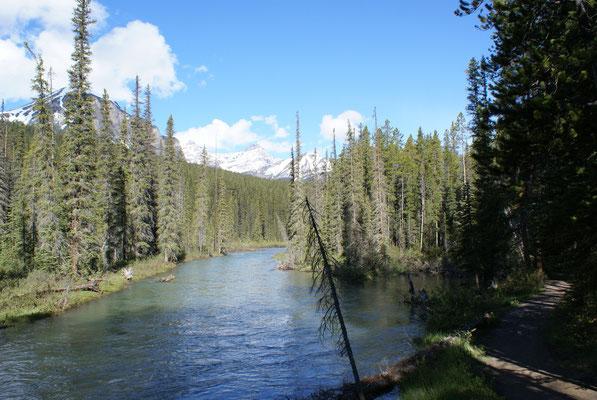 Wanderung im Bärengebiet um Lake Louise