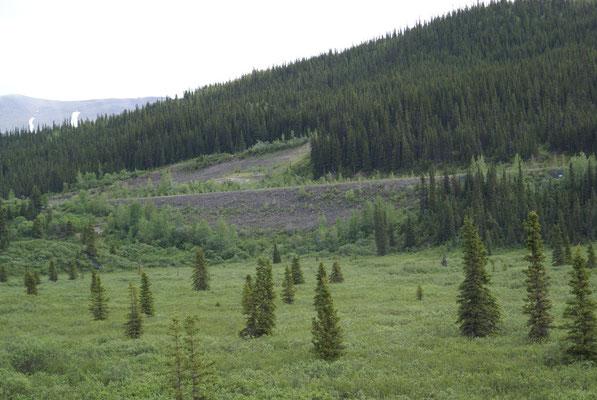 Kurz vor der Alaska Hwy im Norden der Cassiar Hwy