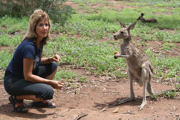 Wir wissen es, Wildtiere bitte nicht füttern, aber nur für das eine Foto. Binnaway, New Sout Wales, Australien