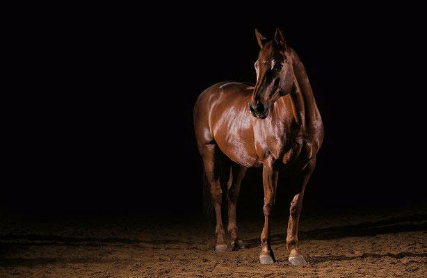 horse in black 01