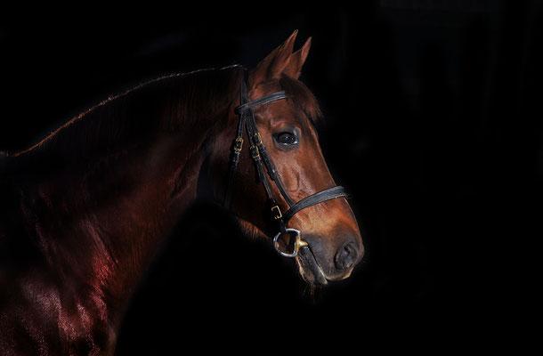 horse in black03
