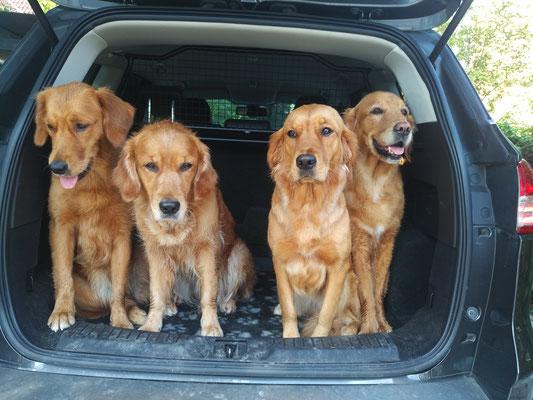 es passen sogar vier in unseren Kofferraum ;-))