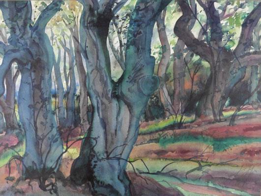 Günter Grass Algraphie: Waldlandschaft II (56,5 x 75,5; am Markt vergriffen, 1 x lieferbar)