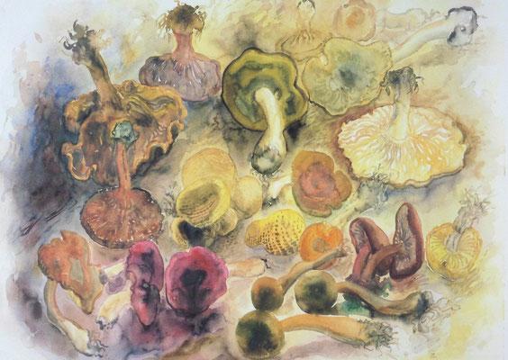 Günter Grass Algraphie: Pilze (45 x 63 / 55 x 71; am Markt vergriffen, 1 x lieferbar)