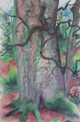 Günter Grass Algraphie: Bäume III (50 x 37 / 71 x 50; am Markt erhältlich)