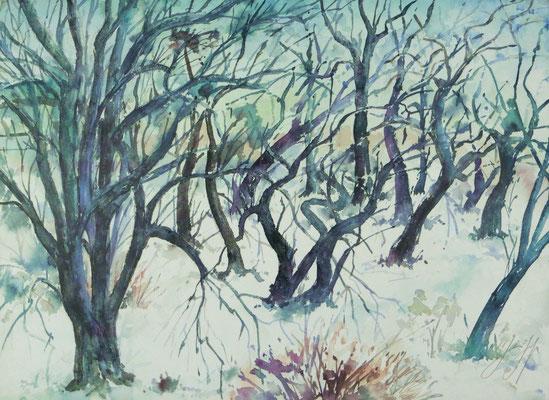 Günter Grass Algraphie: Baumlandschaft im Winter (54 x 74,5; am Markt erhältlich)