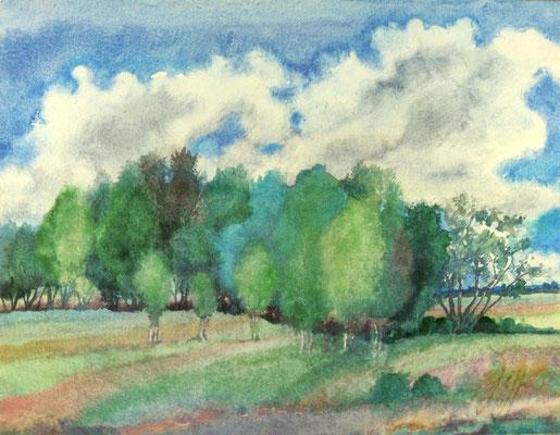 Günter Grass Algraphie: Landschaft mit Birken (51 x 66; am Markt erhältlich)