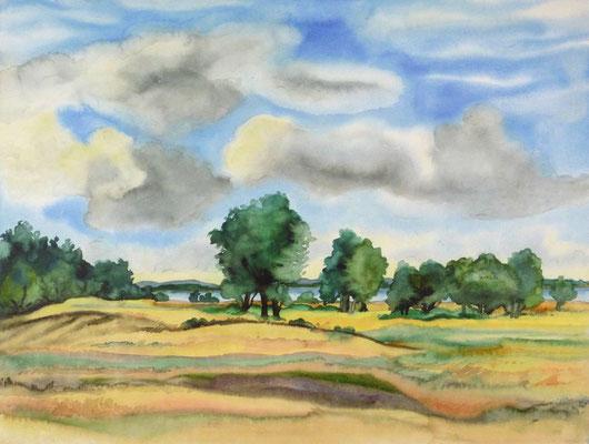 Günter Grass Algraphie: Sommerlicher Norden (30,5 x 45,5 / 38 x 53,5; am Markt erhältlich)