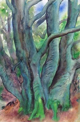 Günter Grass Algraphie: Bäume I (57 x 38 / 71 x 50; am Markt erhältlich, lieferbar)
