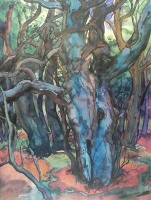 Günter Grass Algraphie: Waldlandschaft I (75,5 x 56,5; am Markt erhältlich)
