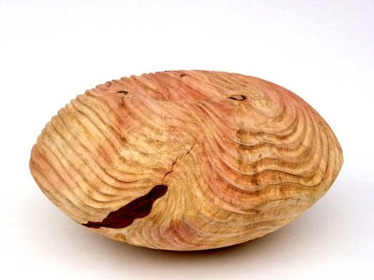 thomas-pildner-mammutbaum-giant-sequoia-ø53h26cm