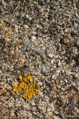 granit et lichen