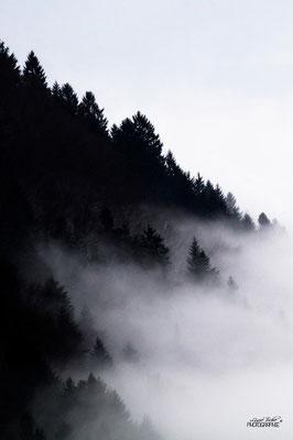 La forêt, engloutie par les nappes vaporeuses de brouillard...