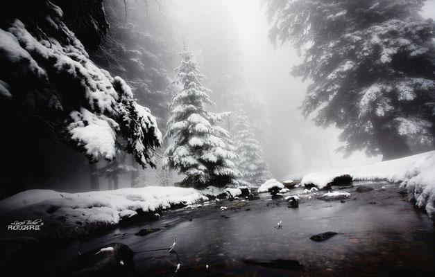 Journée blanche dans les Alpes.