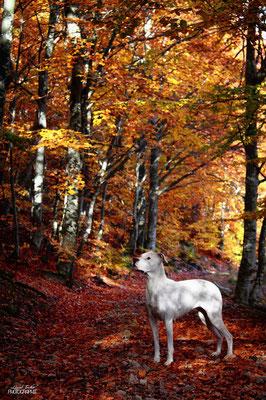 forêt de Lozère