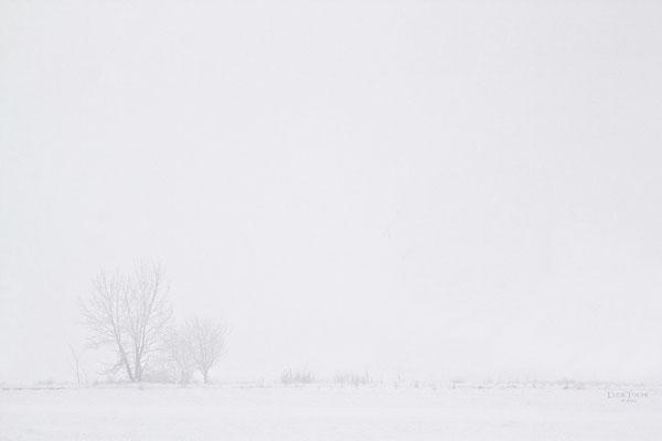 Between White&White