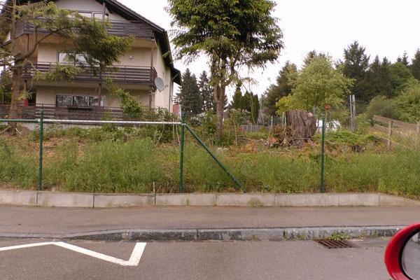 Bäume fällen, Stuppen entfernen, 40m³ Humus auffüllen, Rasen anlegen