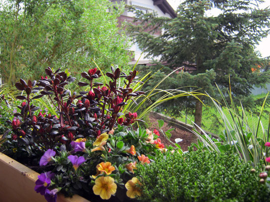 Blumenkästen bepflanzen