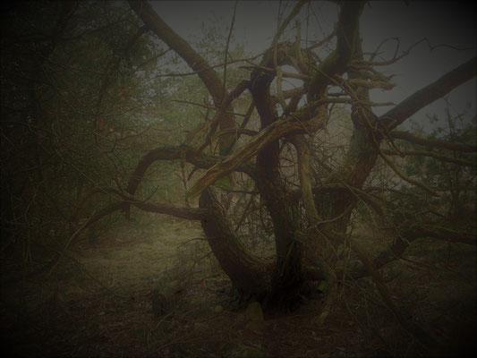 W1 Märchenwald