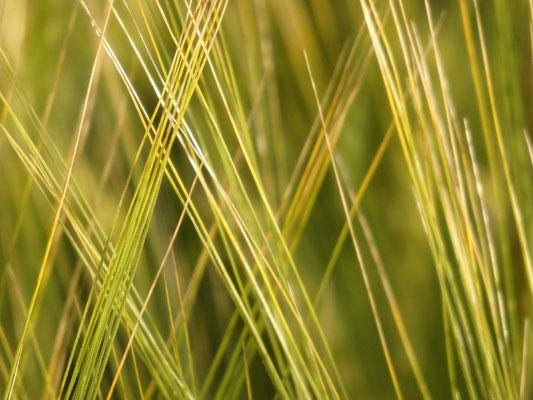 24. Getreide