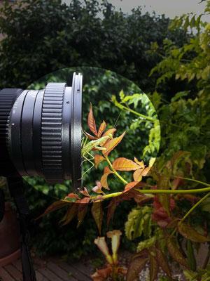 test objectif laowa 15mm macro  pour illustration blog Patrick  goujon