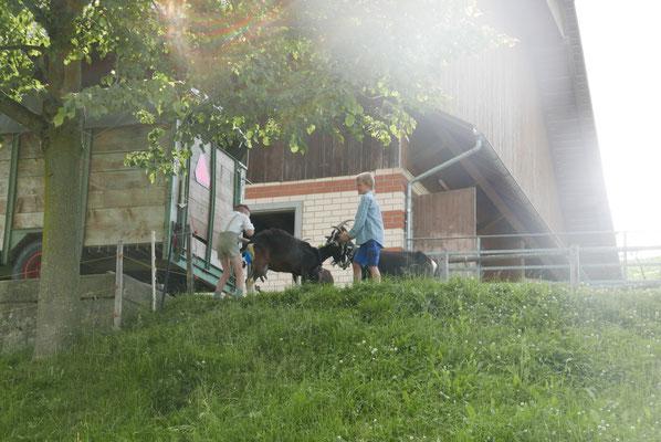 Die Kinder aus Rengg holen die Ziege....