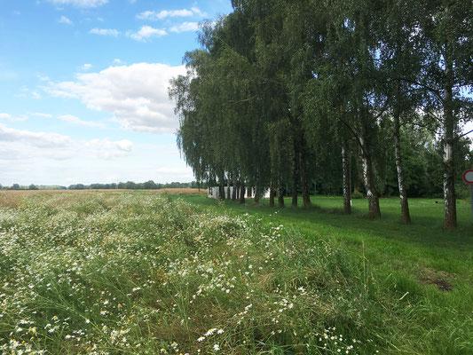 Wiesen und Felder neben Birken