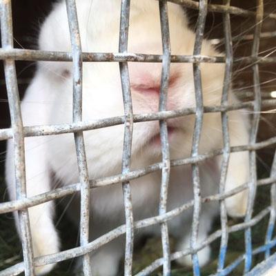 Hasen und Kaninchen können gestreichelt werden