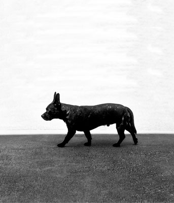 Hund, 2014, archival pigment print, 85 x 72 cm
