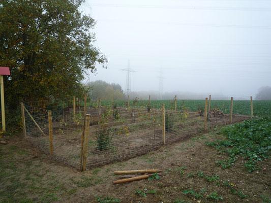 Um die jungen Pflanzen vor Wildverbiss zu schützen, ist das Areal zunächst eingezäunt. (Foto: J. Spatz)