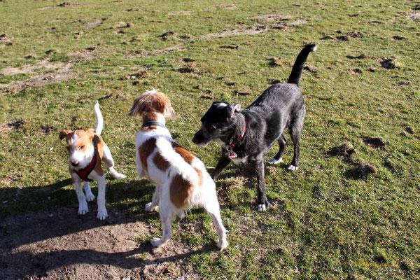 Anton, Kabou & Molly
