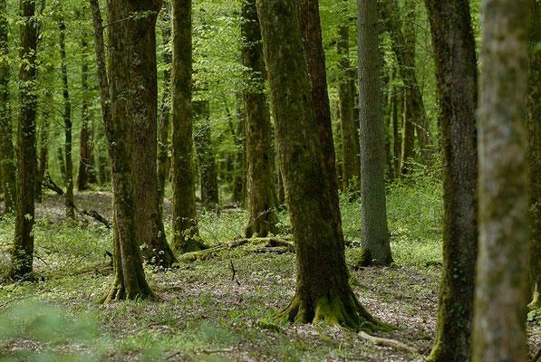 Forêts autour de Beaulieu-en-Argonne - Michel Petit