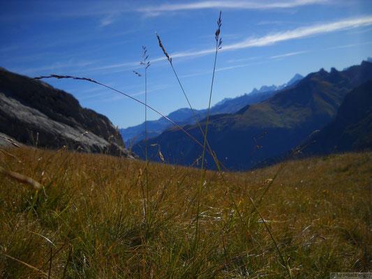 Brins d'herbes vers la lac de Peyre
