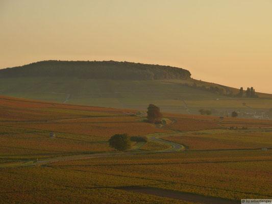 Vignes au dessus de Dijon