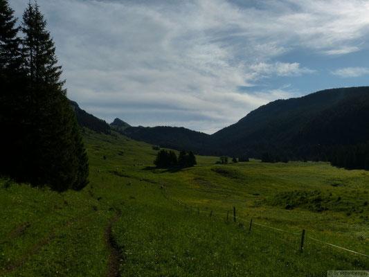 Champ laitier (massif du plateau des Glières)
